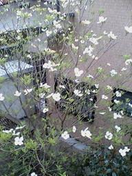 2007419_hanamizuki