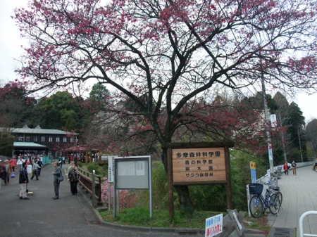 45sakura_006