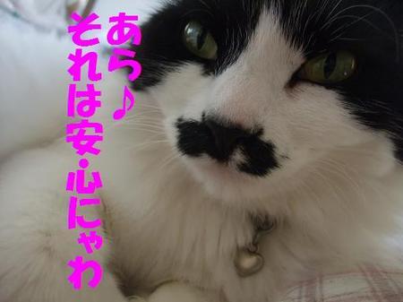 59neko_006