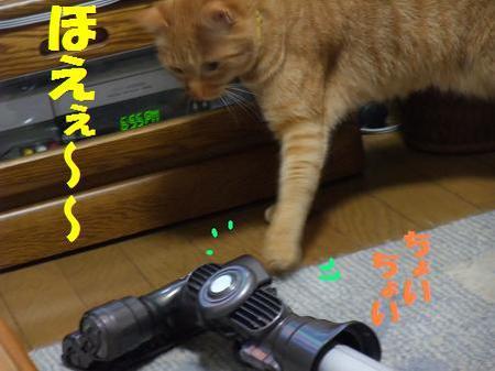 618neko_014