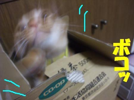 72neko_006