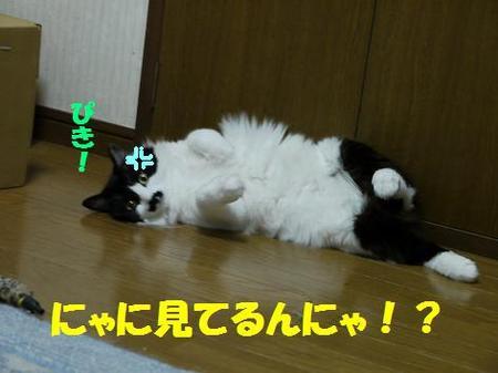 77neko_003_2