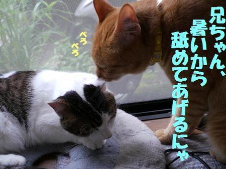 79neko_057