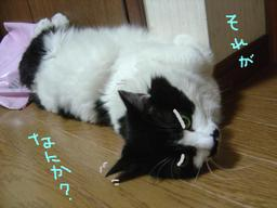 729_nekohanabi_0012