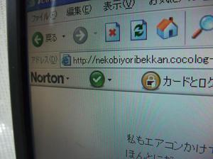 717neko_004