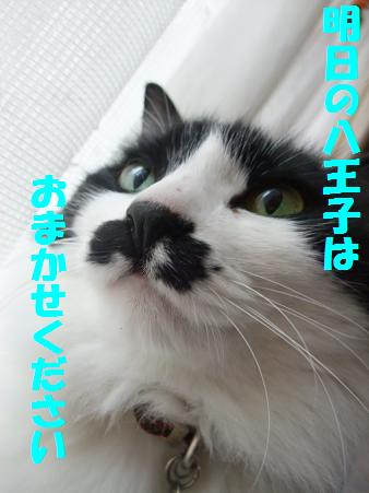 216neko_002