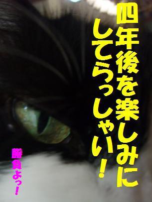 221neko_007_2