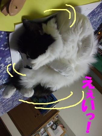 227neko_006
