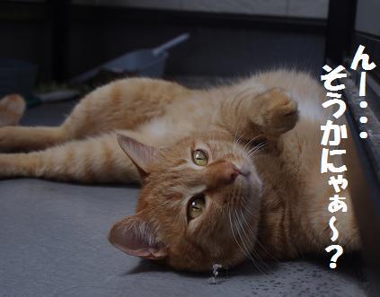 Nejirekoto1