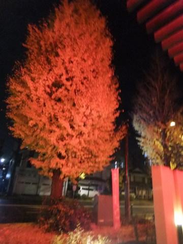 Yokohamaya_021